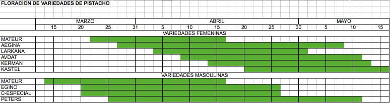 Floración de variedades femenina y masculina de pistacho