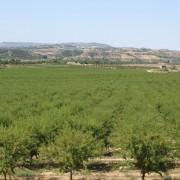 Vista aérea del cultivo de almendros