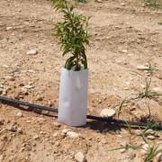 Planta de almendro en detalle