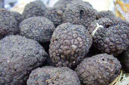 Detalle Trufa Negra cultivada