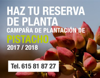 campaña plantación de pistacho 2017-2018