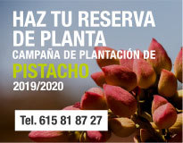 campaña plantación pistacho 2019-2020